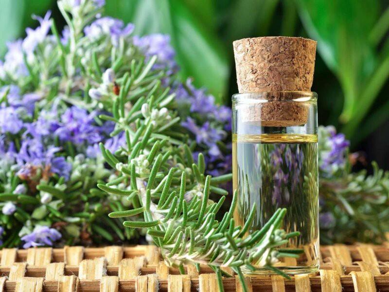 Описание эфирного масла розмарина